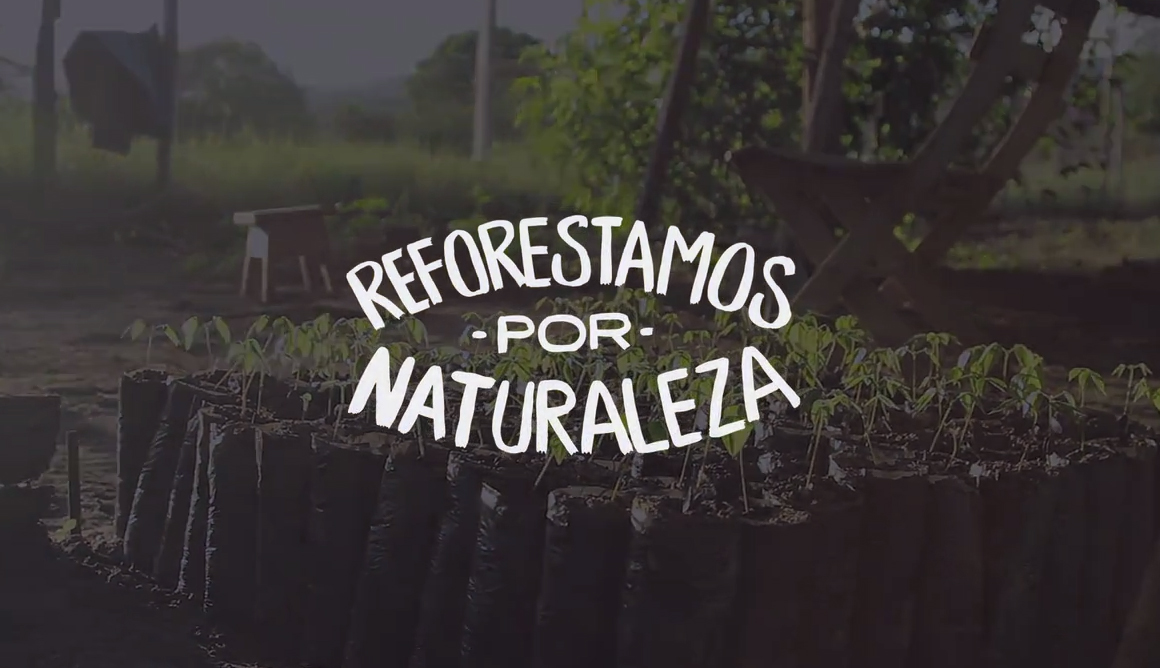 reforestamosII
