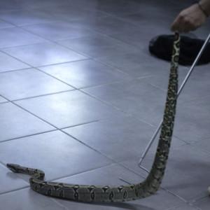 Taller contra el tráfico de fauna silvestre en Tarapoto.