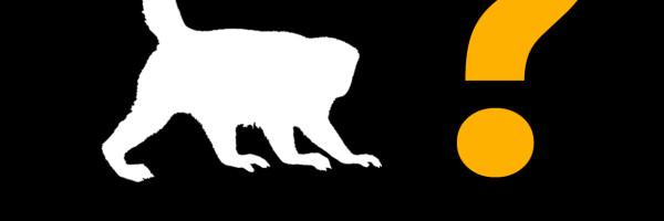 Tráfico de fauna en el Perú
