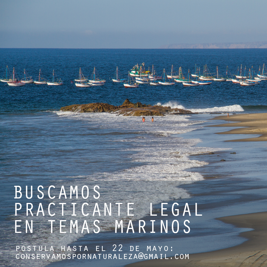 oportunidad-practicante-legal